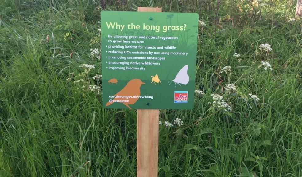 Nature left to flourish in numerous East Devon green spaces