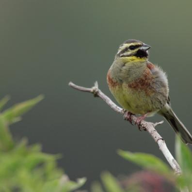 Volunteers needed to help one of the West Country's special birds to thrive
